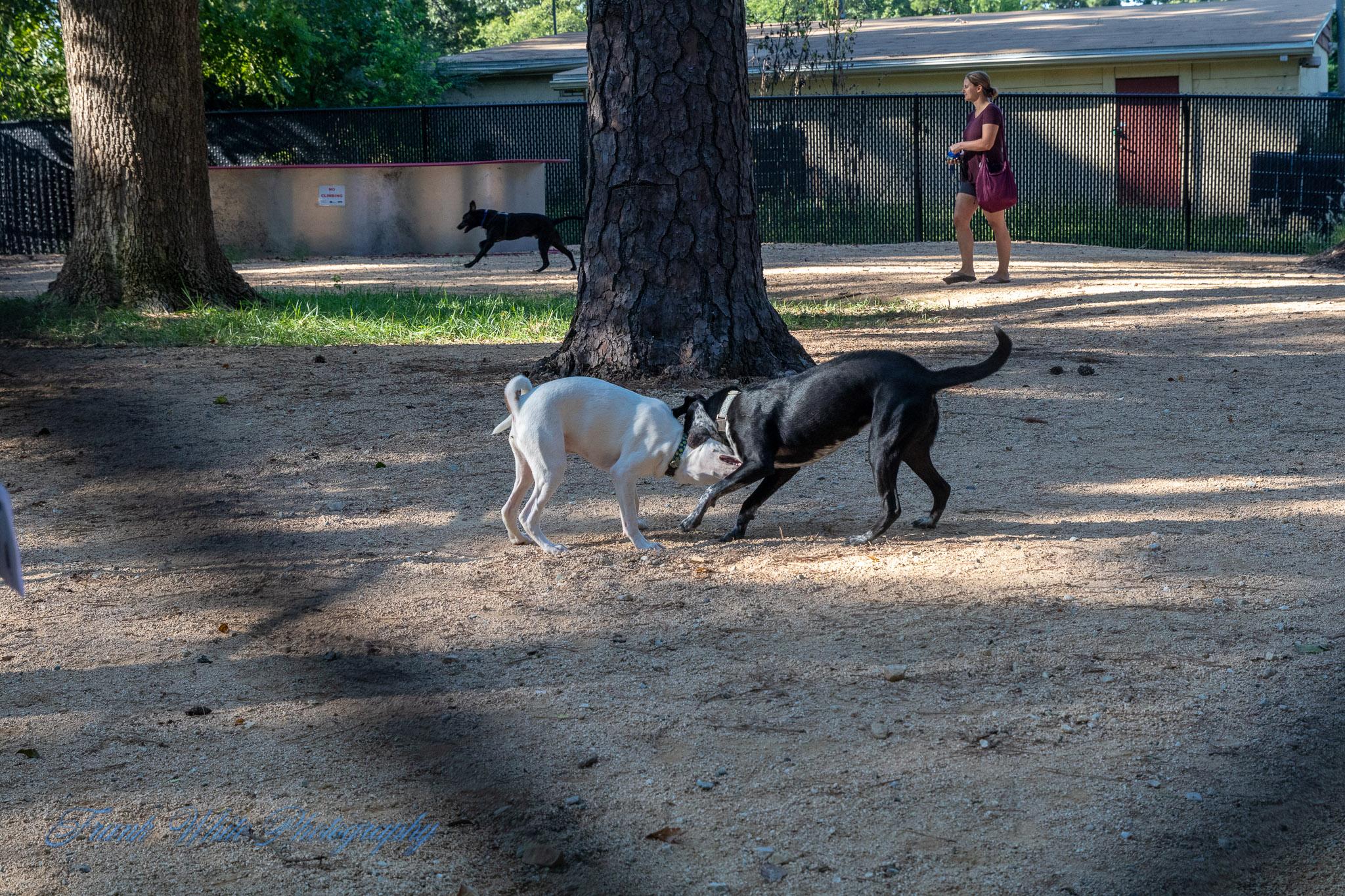 Duke-Dog-Park---Official-opening-156.jpg