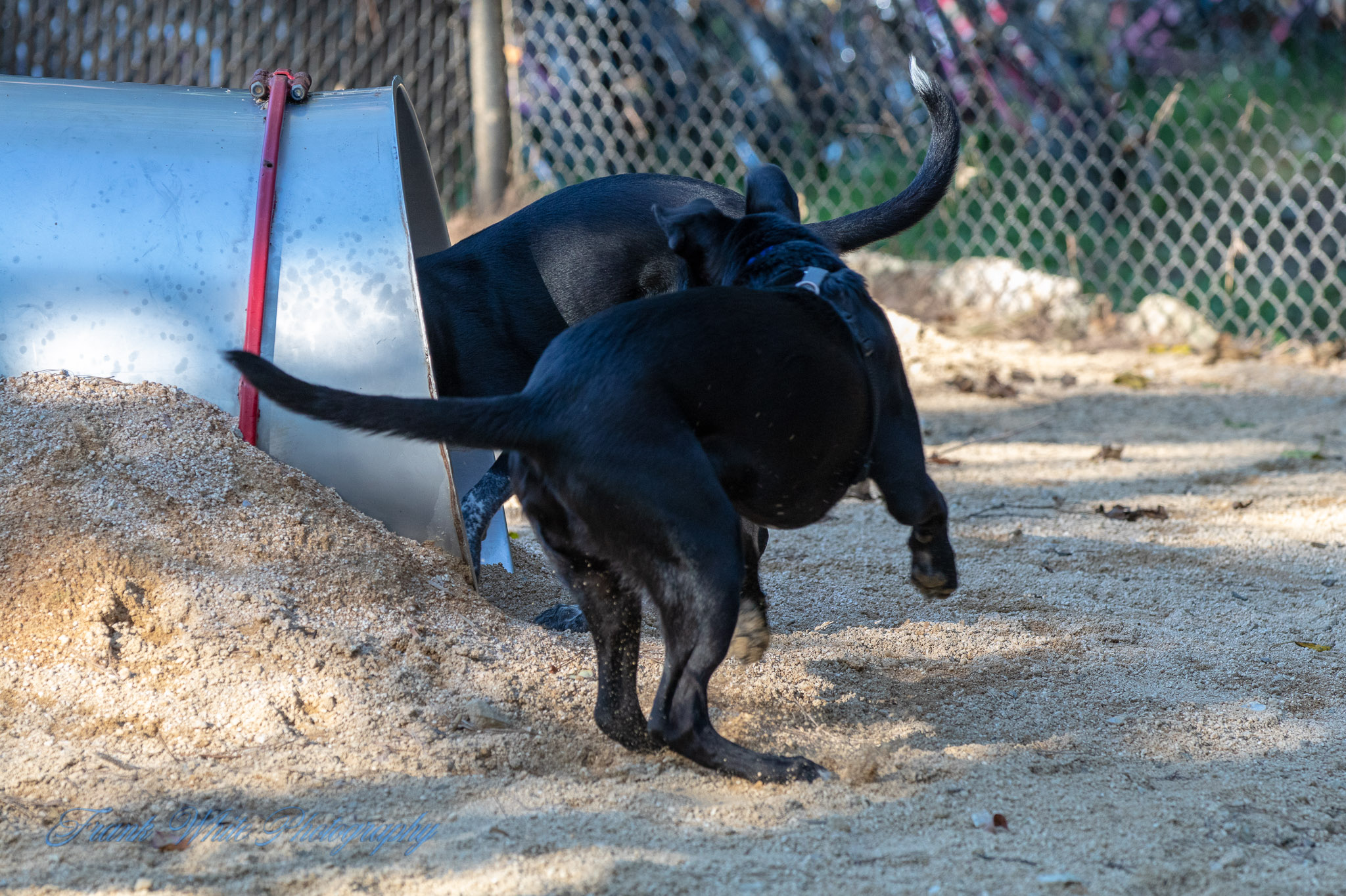 Duke-Dog-Park---Official-opening-166.jpg