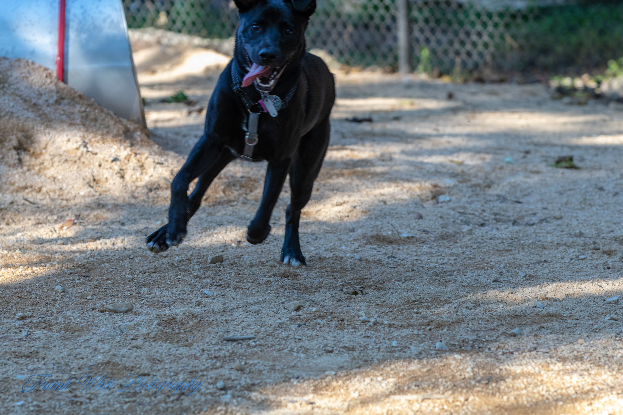 Duke-Dog-Park---Official-opening-202.jpg