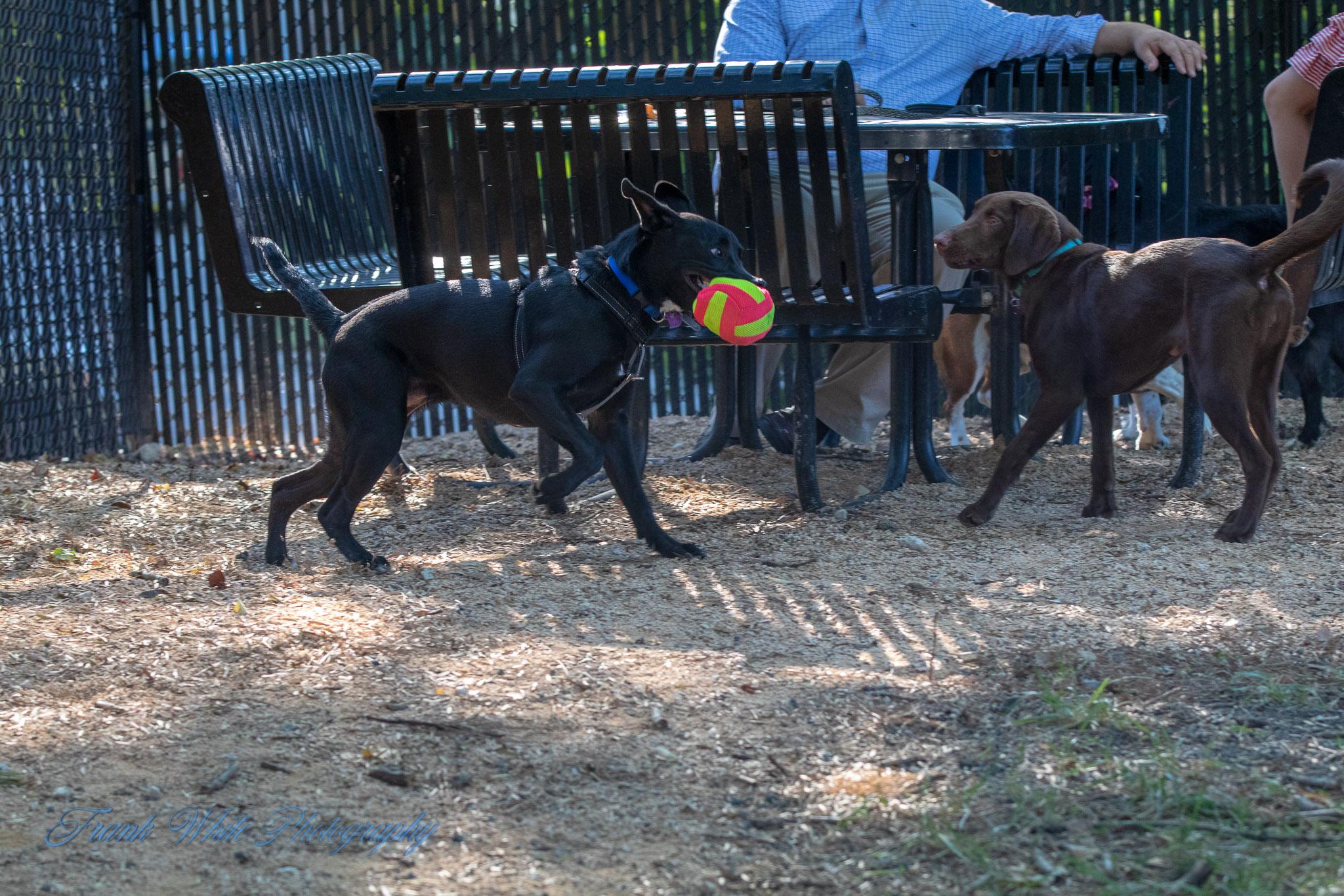 Duke-Dog-Park---Official-opening-227.jpg