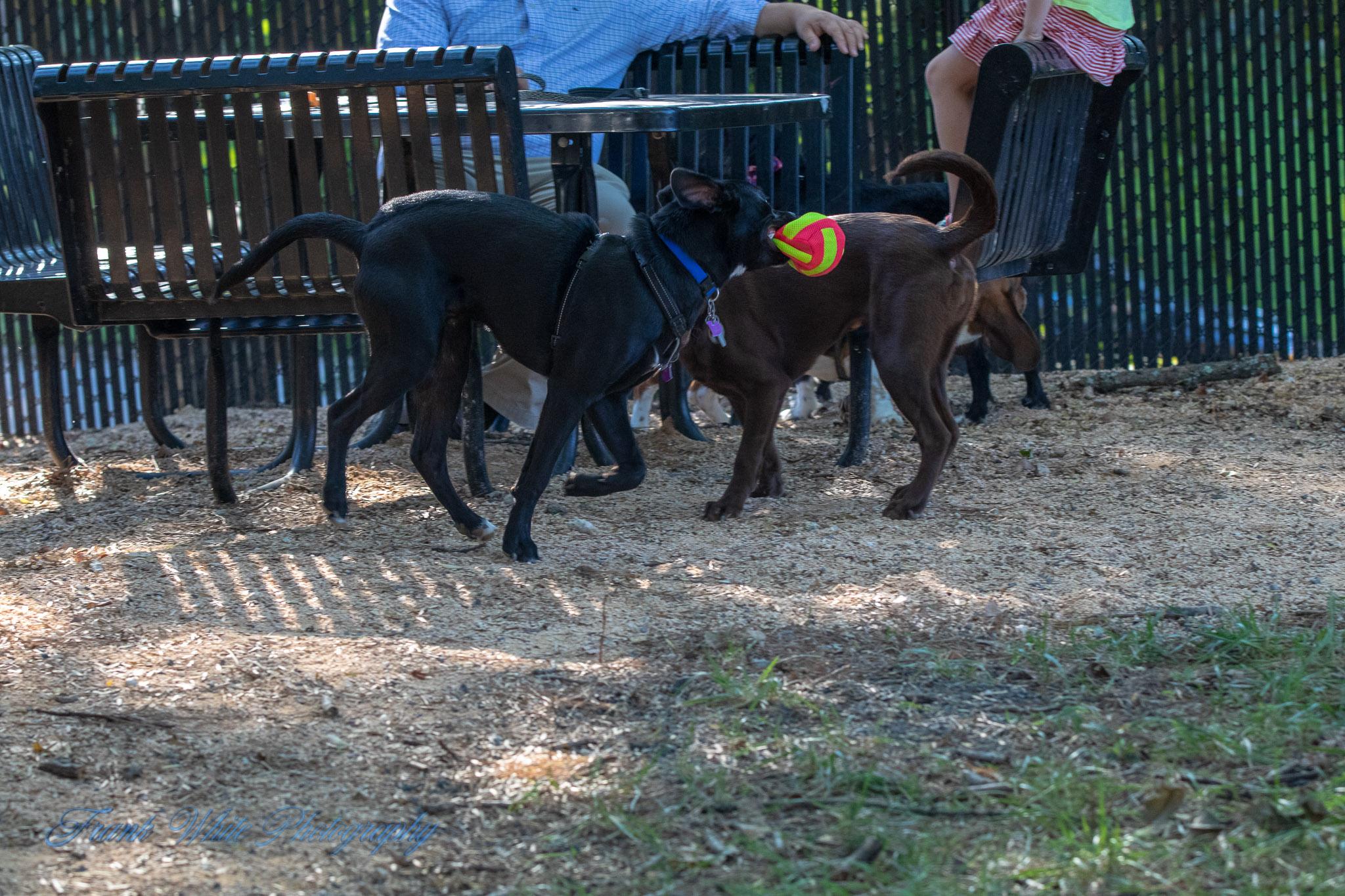 Duke-Dog-Park---Official-opening-228.jpg