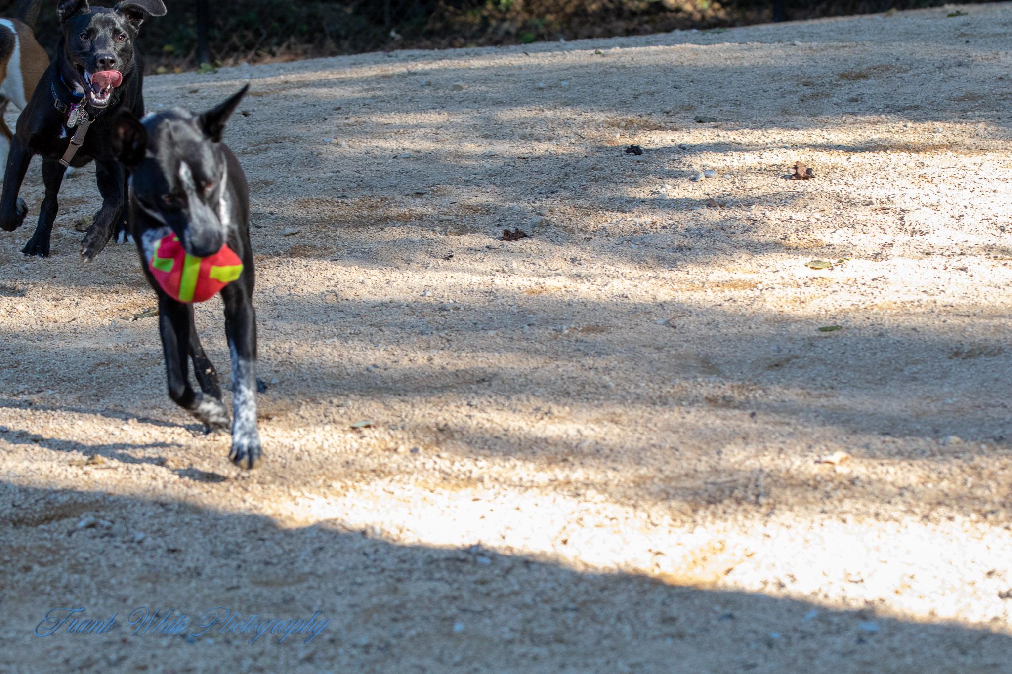 Duke-Dog-Park---Official-opening-253.jpg