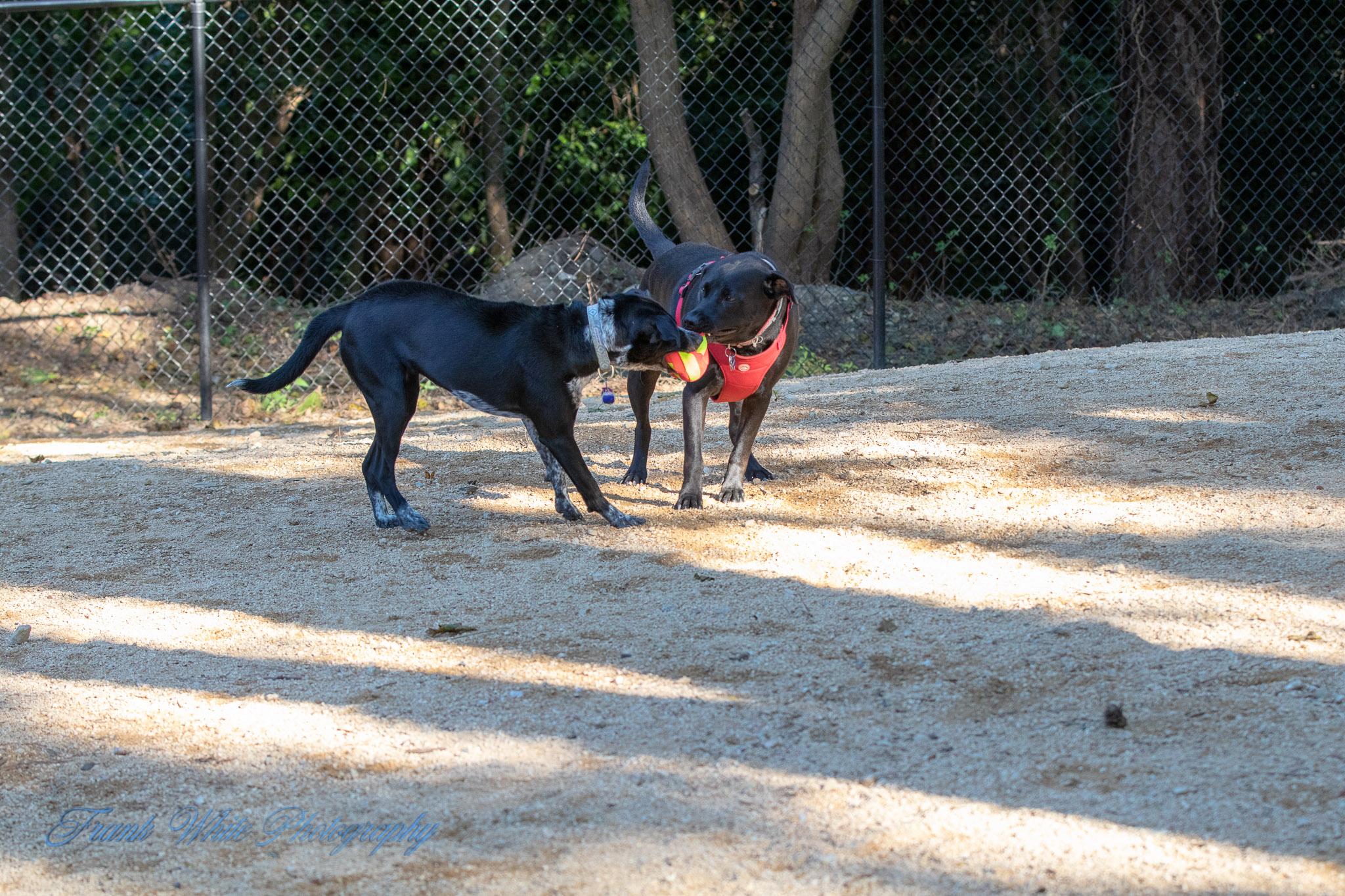 Duke-Dog-Park---Official-opening-264.jpg