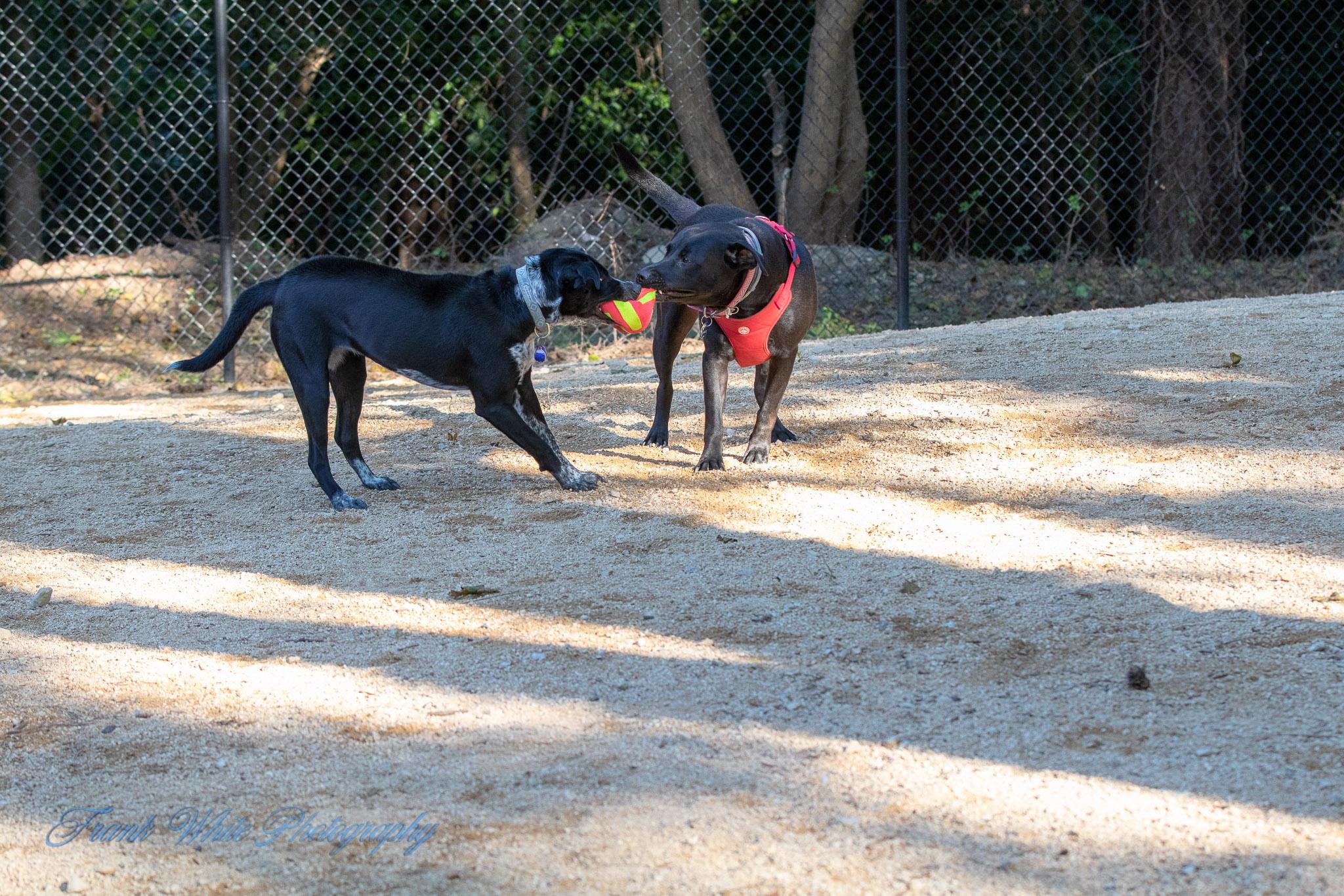 Duke-Dog-Park---Official-opening-265.jpg