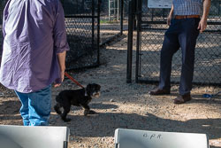 Duke-Dog-Park---Official-opening-131.jpg