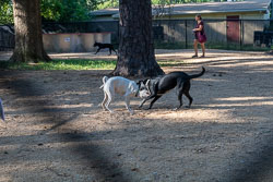 Duke-Dog-Park---Official-opening-156.jpg