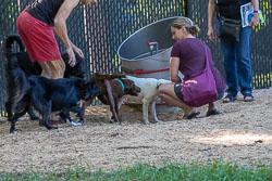Duke-Dog-Park---Official-opening-160.jpg
