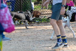 Duke-Dog-Park---Official-opening-212.jpg