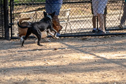 Duke-Dog-Park---Official-opening-214.jpg