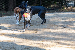 Duke-Dog-Park---Official-opening-251.jpg