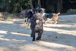 Duke-Dog-Park---Official-opening-263.jpg